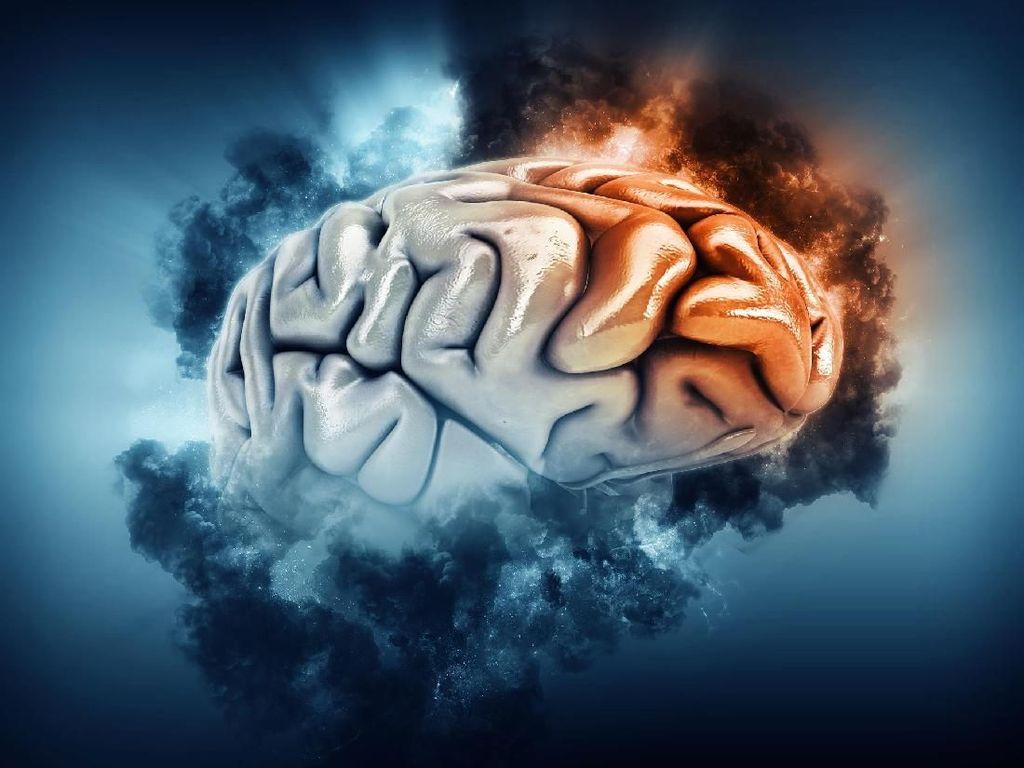 5 Fakta Mengejutkan Seputar Otak Manusia
