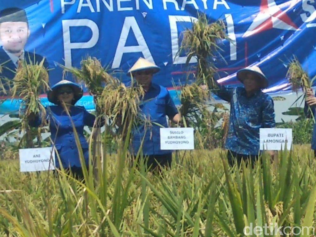 SBY Panen Raya Padi di Lamongan