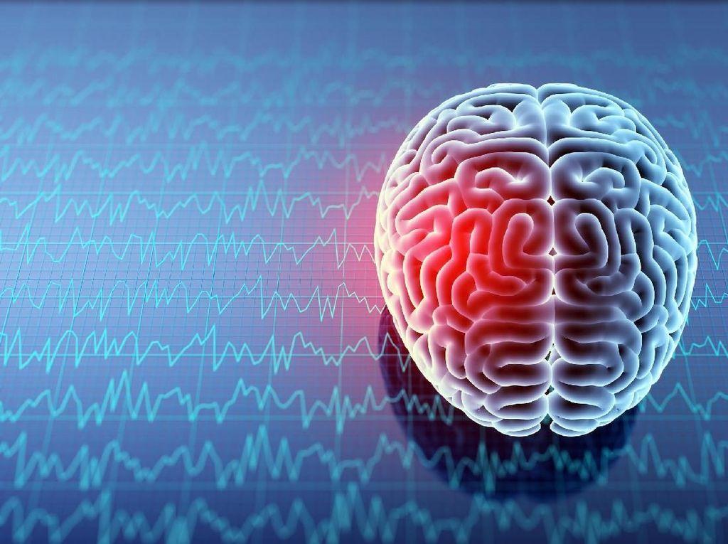 Seorang Pasien Epilepsi Sumbangkan Sebagian Otak untuk Riset