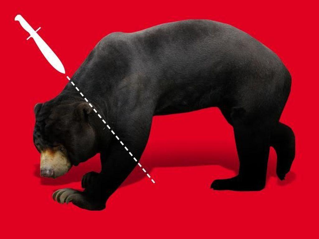Petani Karet di Riau Duel Lawan 2 Ekor Beruang Liar