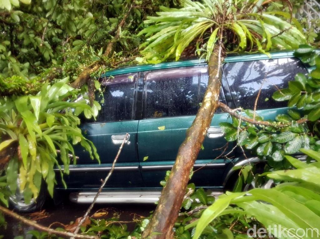 Bruk! 13 Pohon Tumbang di Kota Sukabumi, Arus Lalin Dialihkan