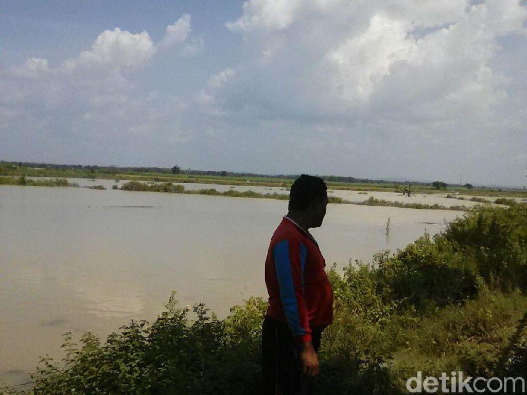 Tambak Warga di Rembang Kebanjiran, Petani Merugi Ratusan Juta