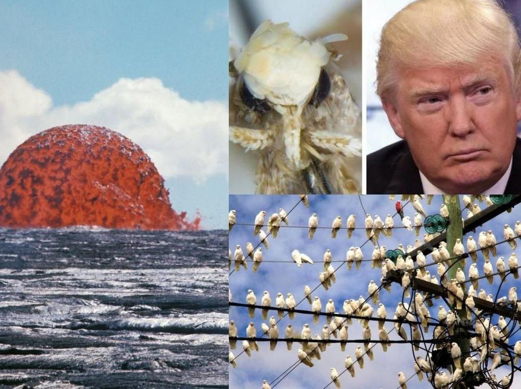 Riuh Dunia dalam Gambar: Kubah Lahar, Ngengat Bernama Trump
