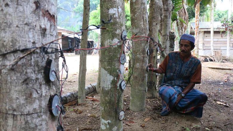 dulu-bikin-heboh-listrik-pohon-kedondong-kini-tinggal-cerita