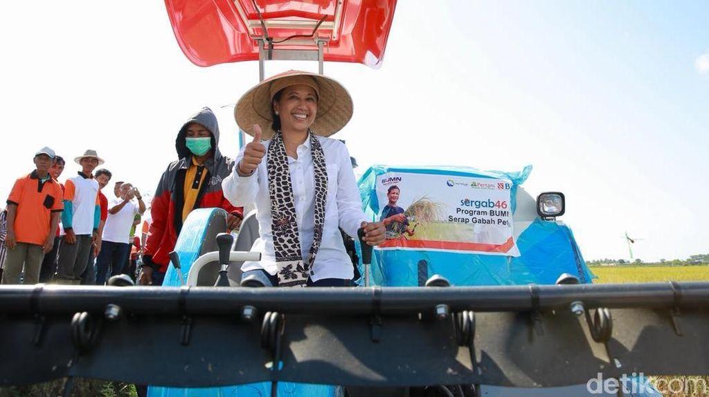 Pakai Caping dan Naik Traktor, Rini Panen Padi di Banyuwangi