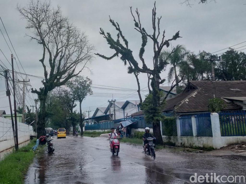 Banyak Pohon Tua Bahayakan Pengguna Jalan Majalaya-Ciparay