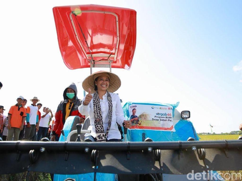 Panen Padi di Banyuwangi, Rini: Gabah Kita Beli Rp 4.400/Kg
