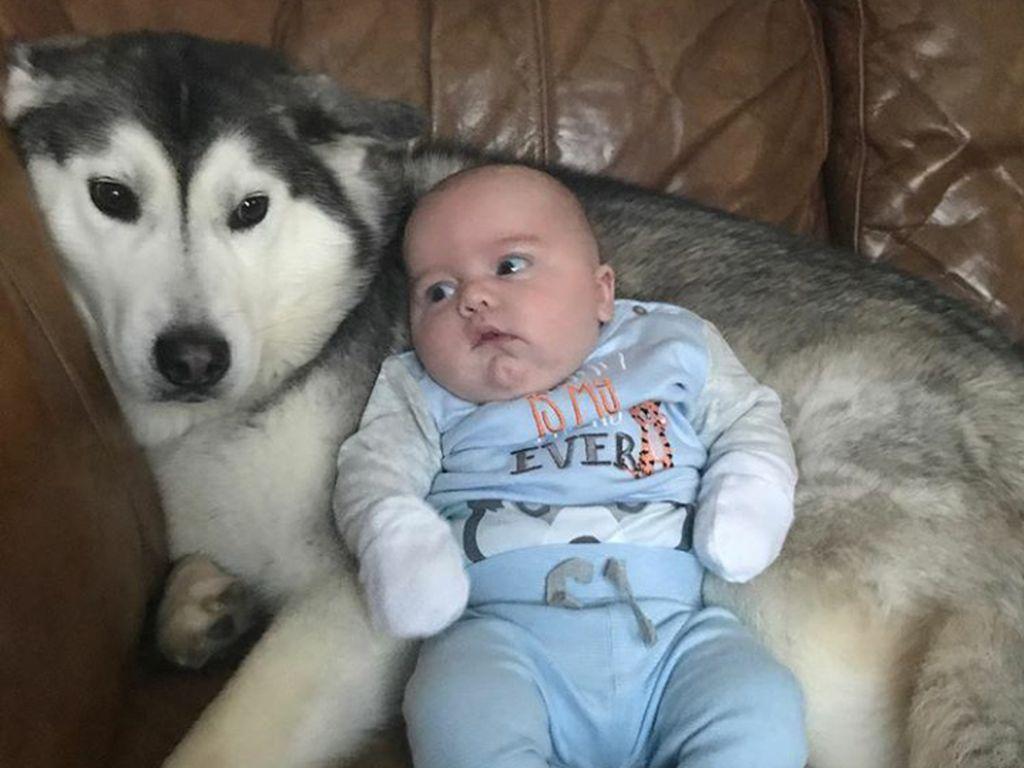 Seorang Bayi dan Anjing Penjaganya yang Setia