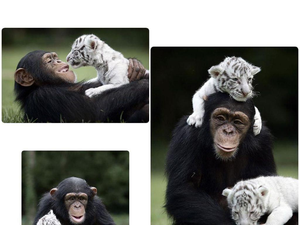 Potret Persahabatan Hewan yang Tak Pandang Bulu