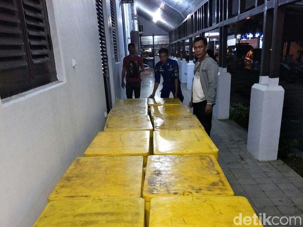 Polisi Tangkap Penyelundup 107.525 Ekor Baby Lobster