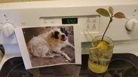 Keren! Anjing Ini Bantu Pemiliknya Tanam Buah Alpukat