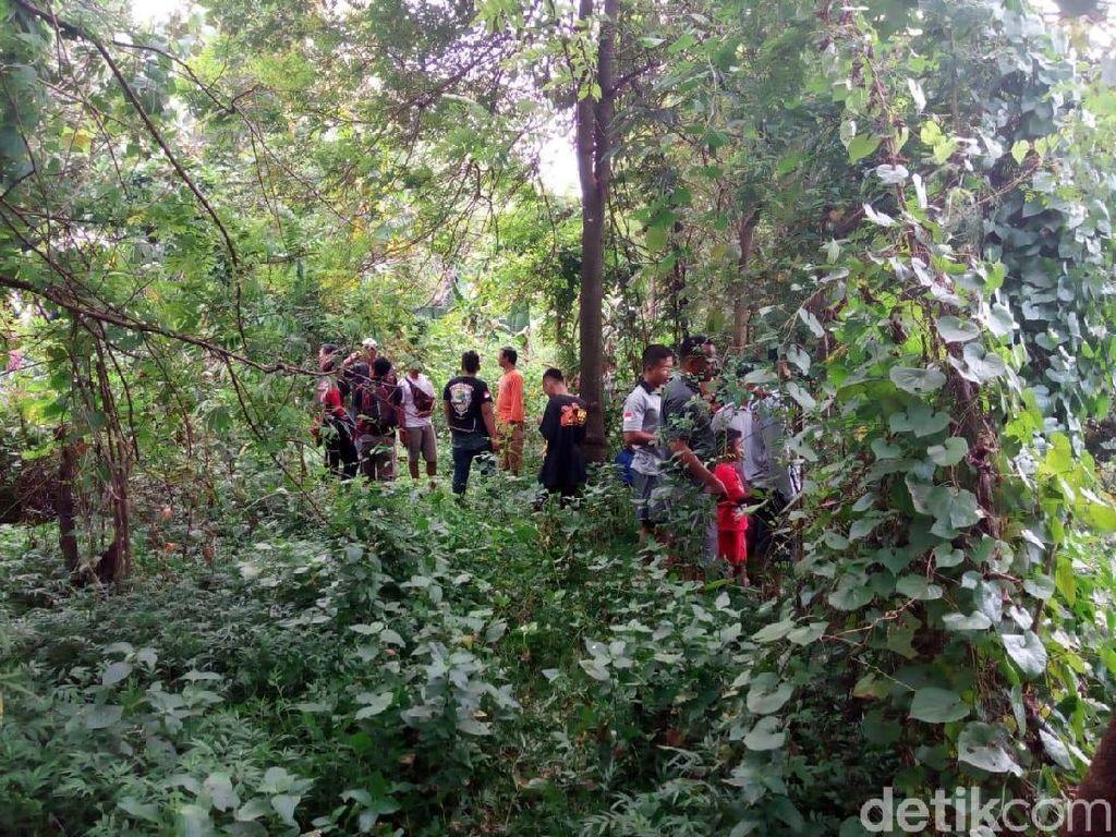 Buaya Lepas di Sukoharjo, Polisi Imbau Warga Tak Dekati Sungai