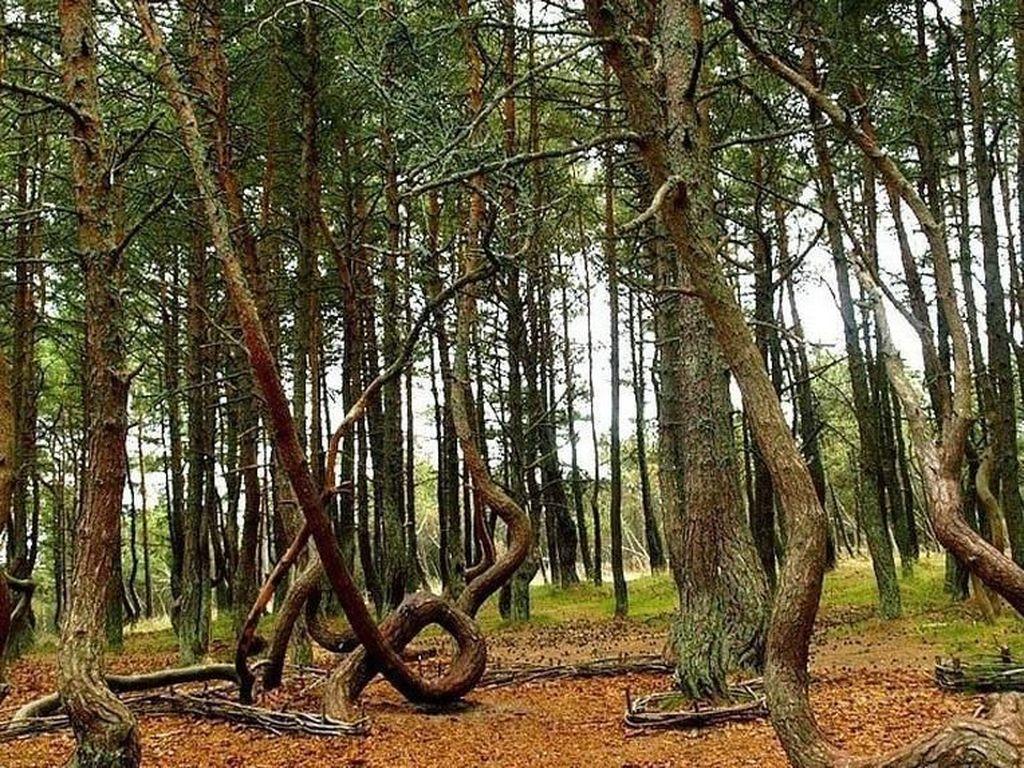 Foto: Pohon-pohon yang Menari
