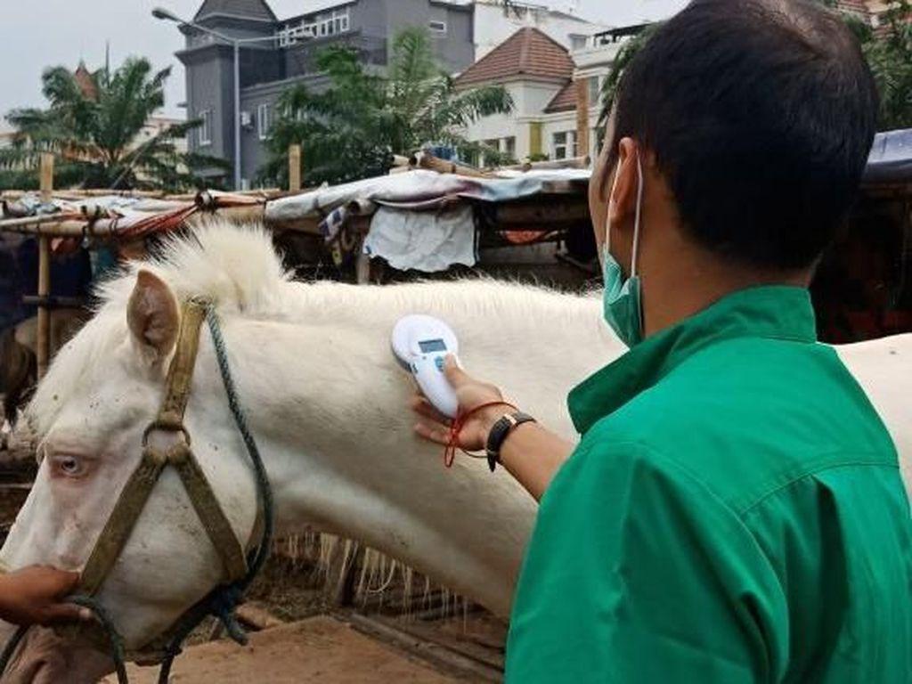 Pemprov DKI Tanam Mikrocip di Kuda di Jakarta