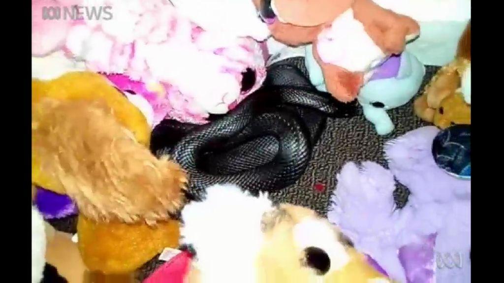Detik-detik Ngeri Ular Berbisa Melata di Antara Mainan Anak