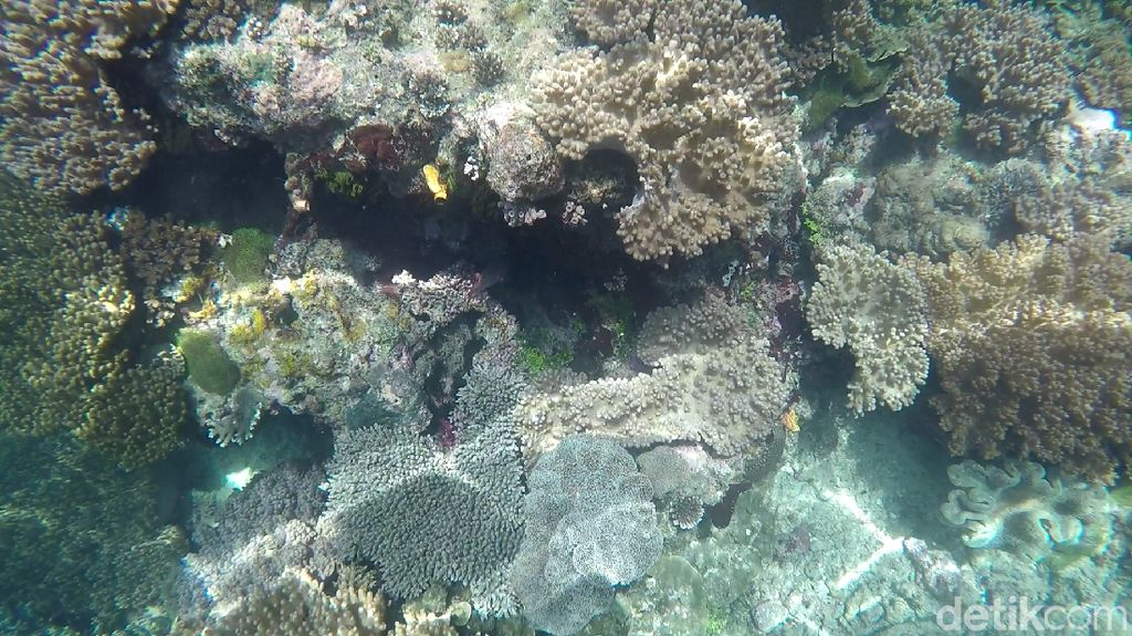 Foto Terbaru Indahnya Bawah Laut Raja Ampat