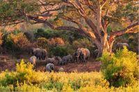 Taman Nasional Kruger / Foto: Shutterstock