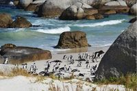 Good Hope Nature Reserve, Afrika Selatan / Foto: Shutterstock