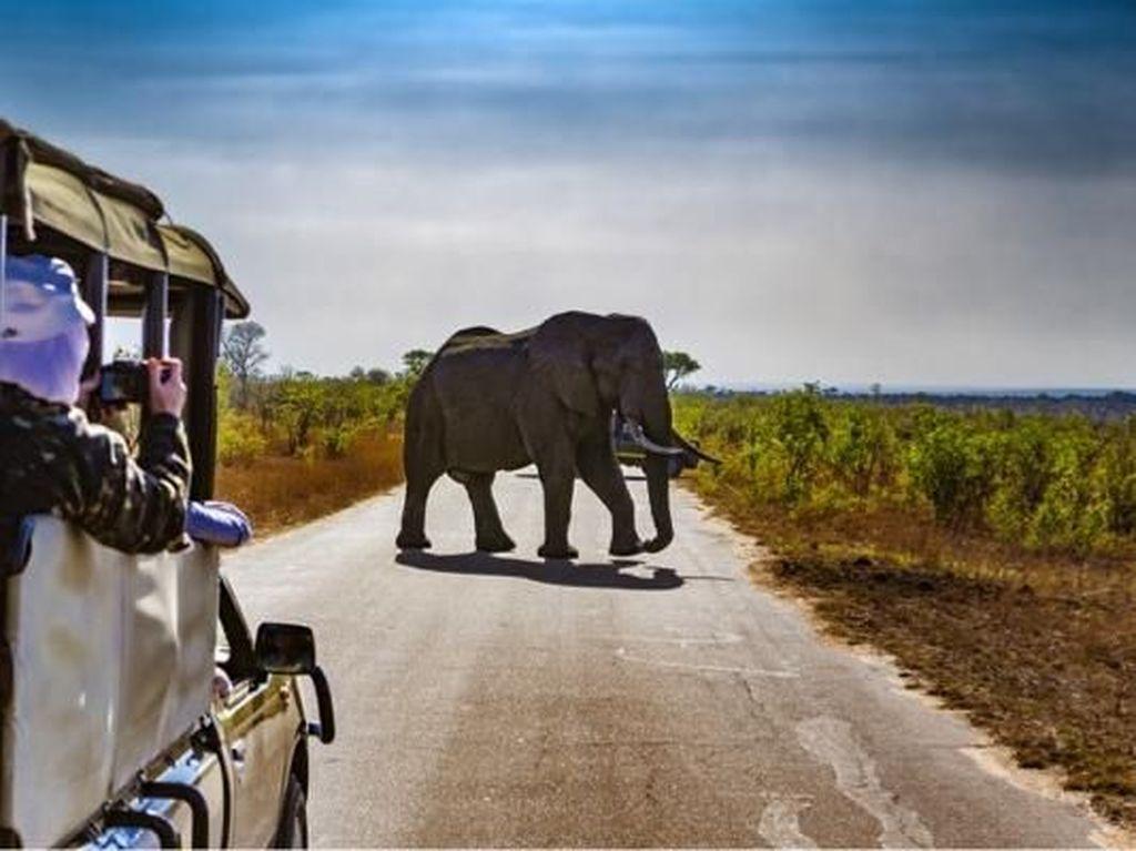 5 Surga Wisata yang Wajib Dikunjungi di Afrika Selatan