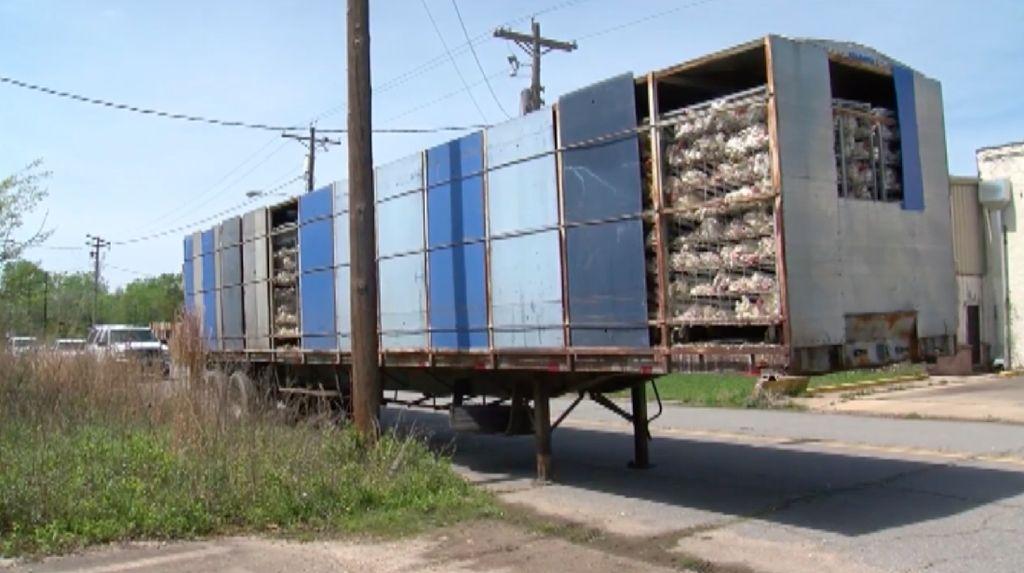 Foto: 3.000 Bangkai Ayam yang Ditinggalkan Begitu Saja di Truk