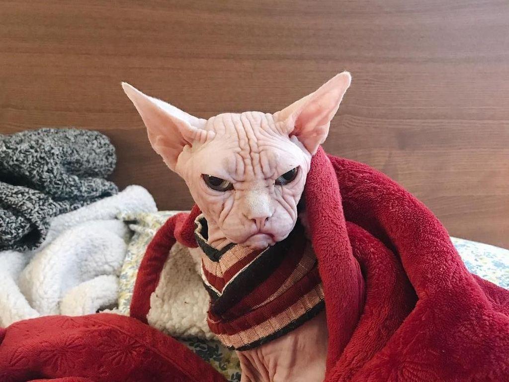 Foto: Loki, Kucing Judes yang Jadi Selebgram dan Viral