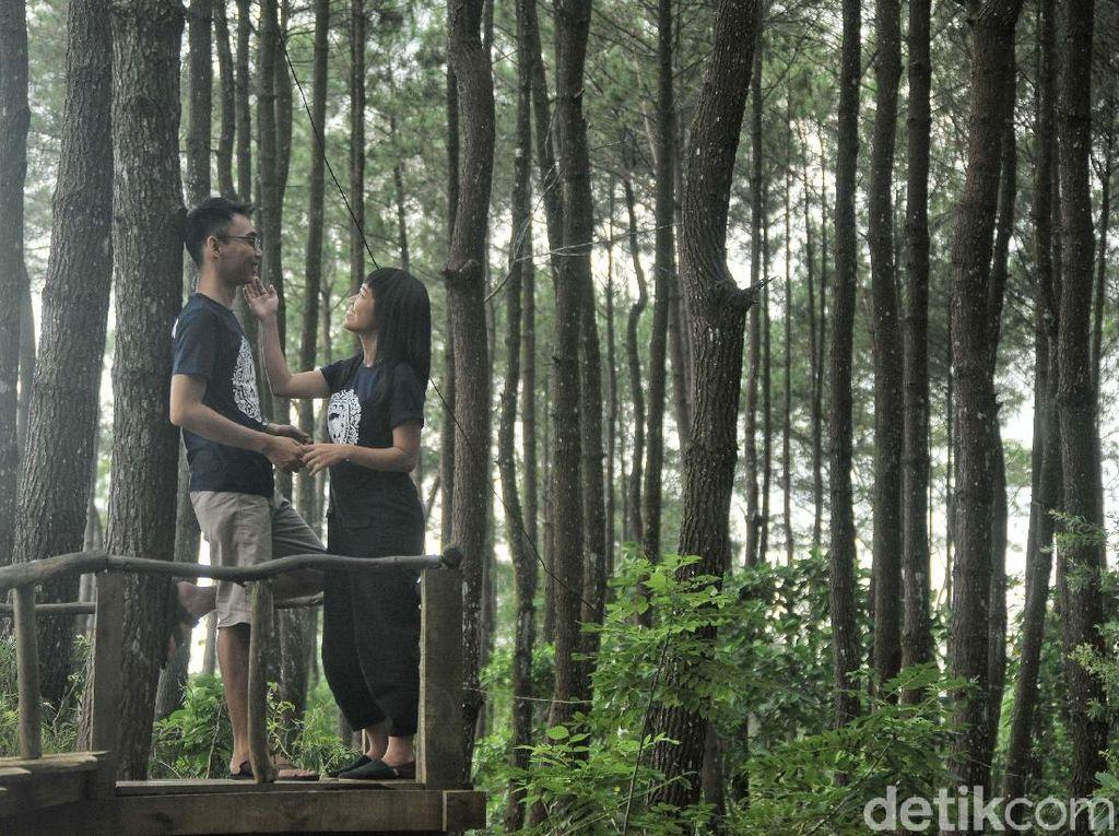 Wisata Jogja Nggak Cuma Malioboro, Ada Hutan Pinus Juga