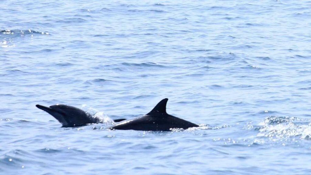 Foto: Tempat Cantik Melihat Lumba-lumba di Lampung