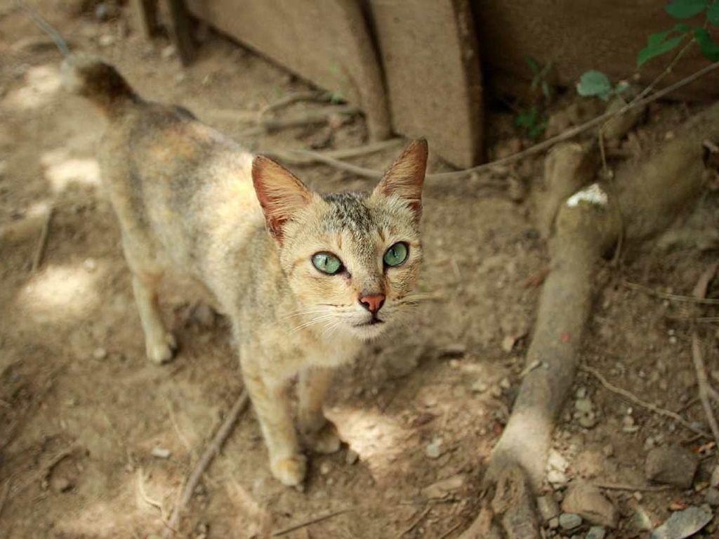 Foto: Pulau Kucing di Indonesia