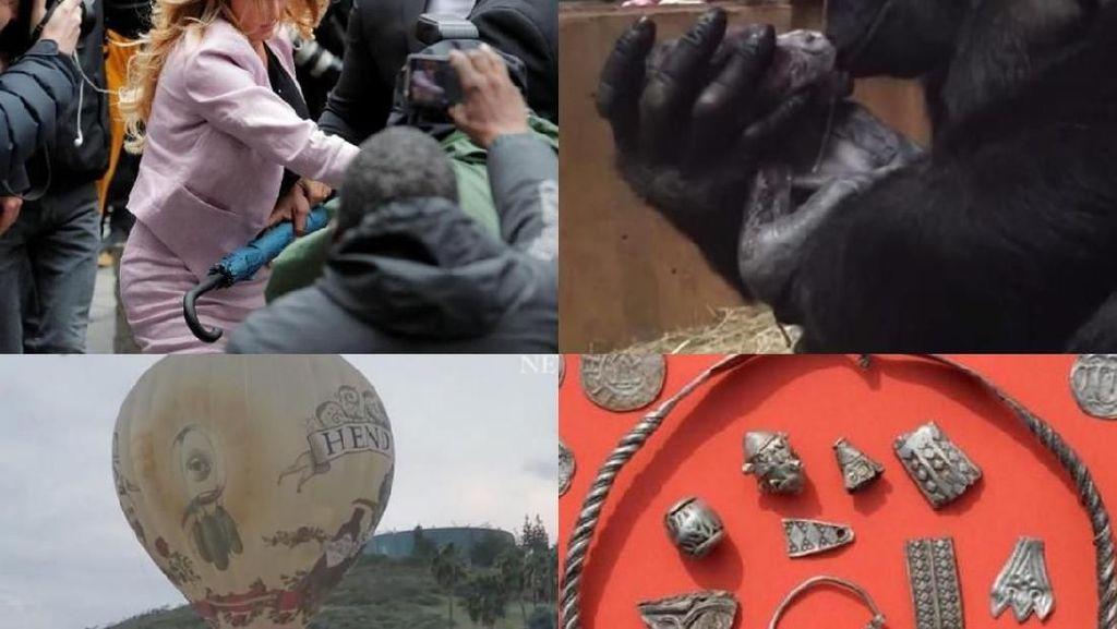 Riuh Dunia dalam Gambar: Bayi Gorila, Selingkuhan Trump Bikin Heboh