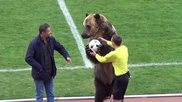 Beruang bernama Tim membuka sebuah laga sepakbola di Rusia (Foto: Screenshot Youtube)