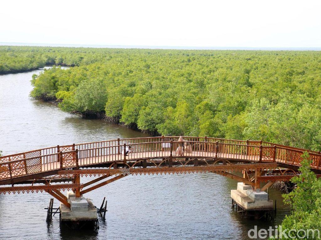 Ini Hutan Mangrove Kekinian di Aceh