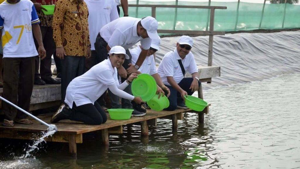 Bawa Baskom, Rini Tebar Benih Udang di Bekasi