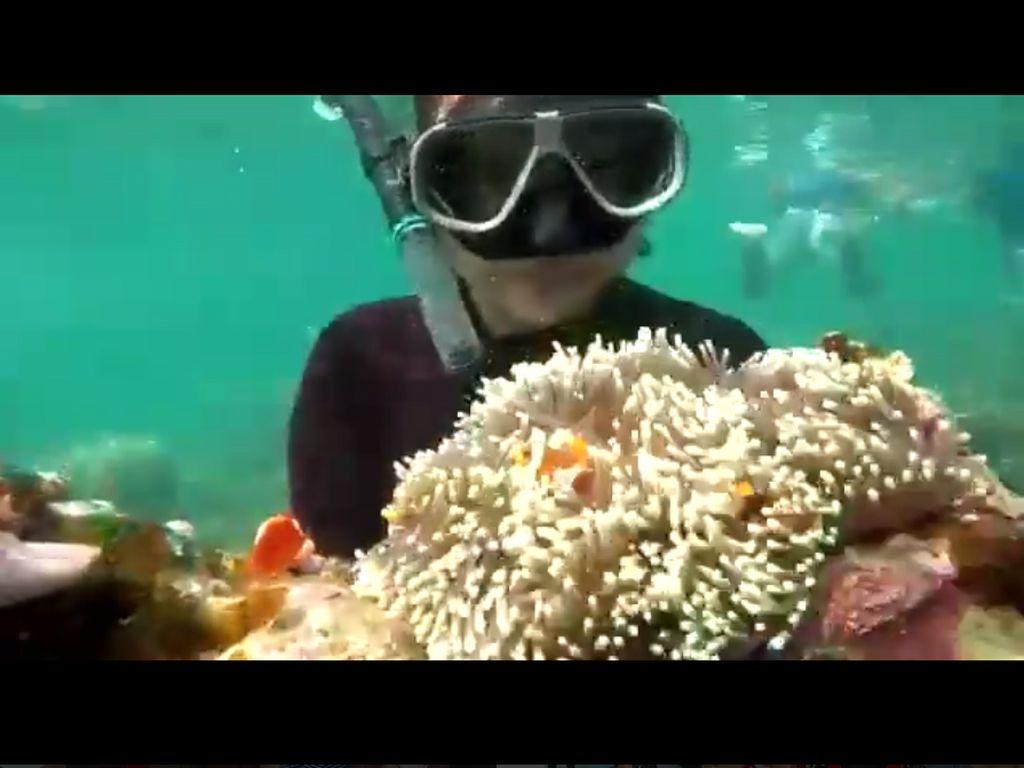Kata Peneliti Soal Karang Laut yang Diangkat-angkat Wisatawan