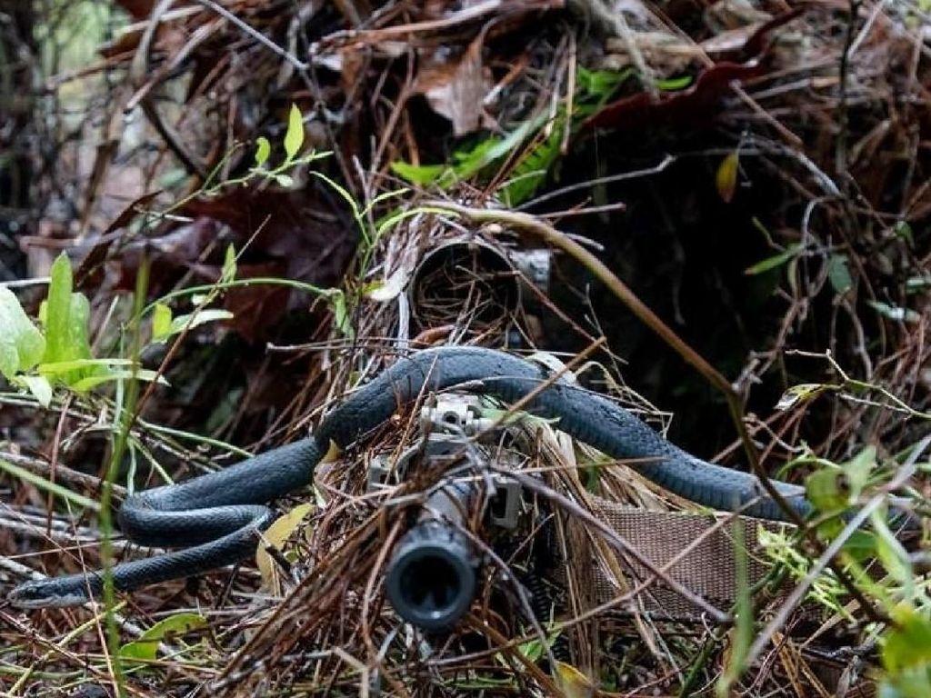 Foto Menakjubkan Saat Ular Melintasi Senapan Sniper AS