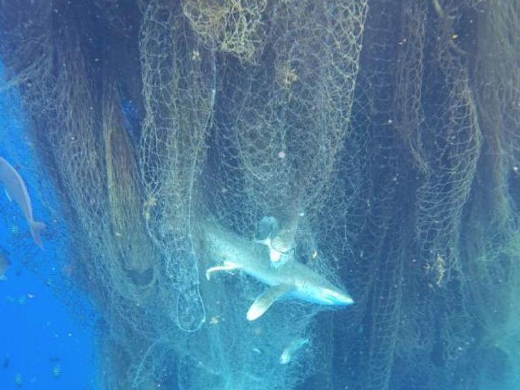 Ada Jaring Hantu di Laut Karibia, Ratusan Ikan Termasuk Hiu Mati