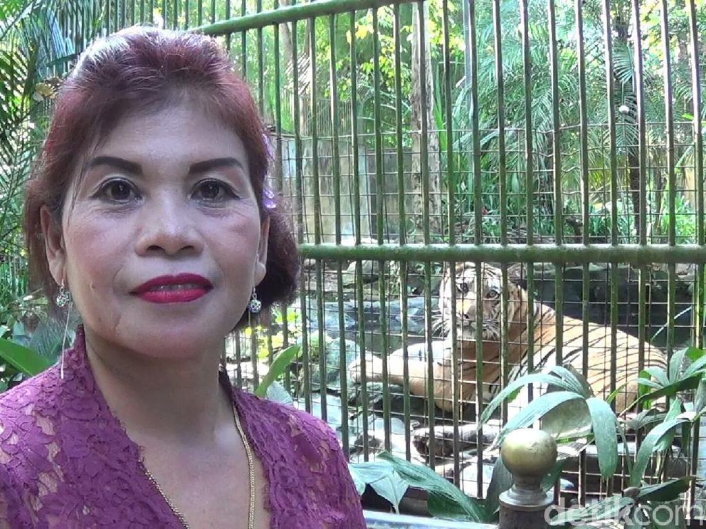 Foto: Para Kartini Pemberi Makan Binatang Buas di Bali