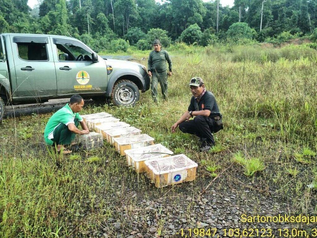 Tak Jadi Diperdagangkan, Ratusan Burung Prenjak Dilepasliarkan