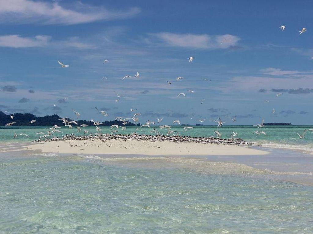 Baby Island, Pulau di Aceh Ini Hanya Muncul 2 Jam Sehari