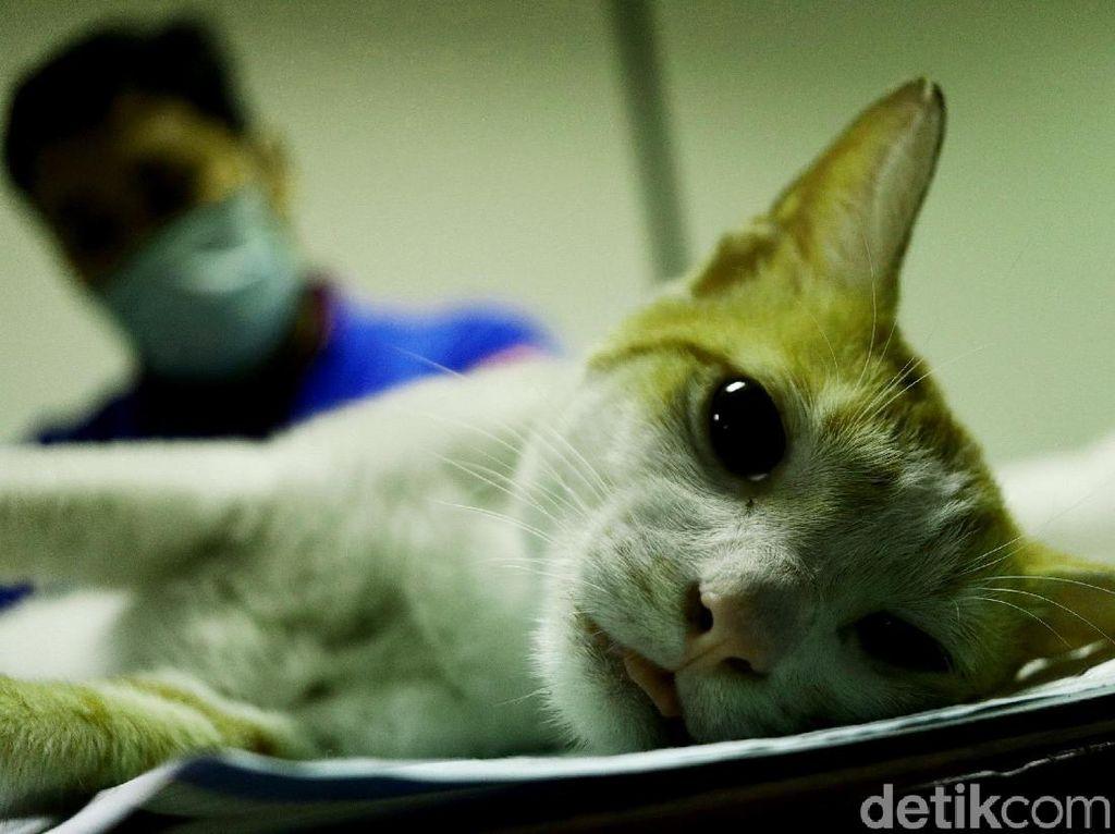 Kocak! Kucing Ini Doyan Banget Ngejahilin Orang