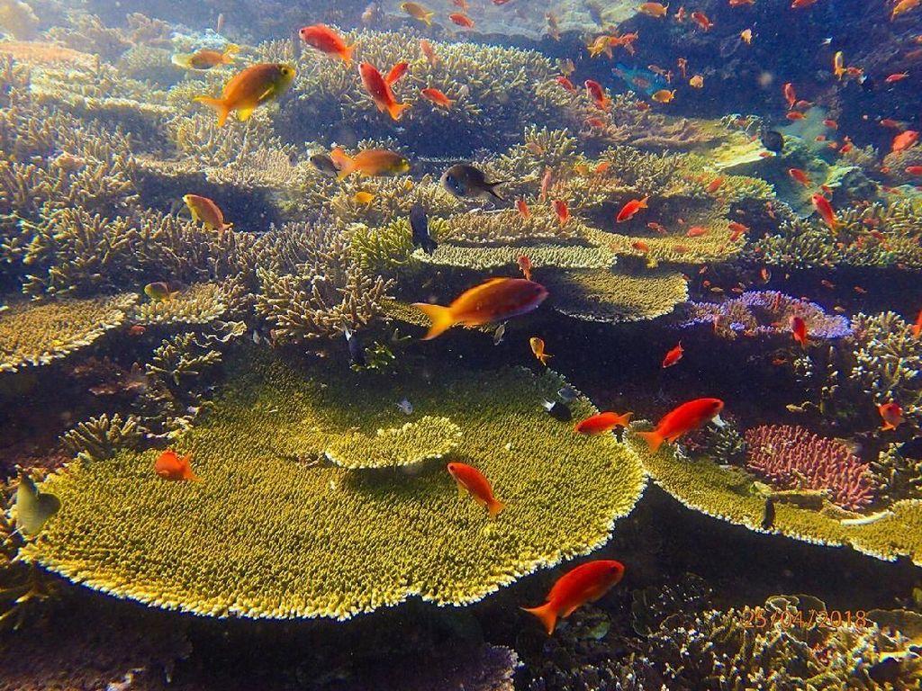 Foto-foto Terkini Bawah Laut Pulau Komodo