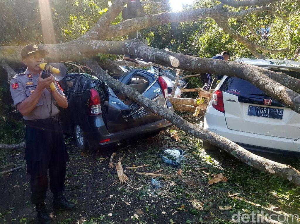 15 Mobil Kena Pohon Tumbang, Walikota Sukabumi: Semoga Diasuransikan