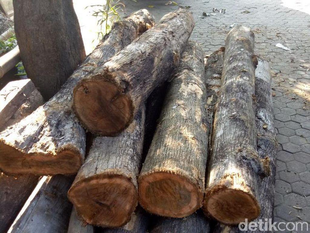 Video: Pembalak Liar Bengong Diomeli Emak-emak di Hutan