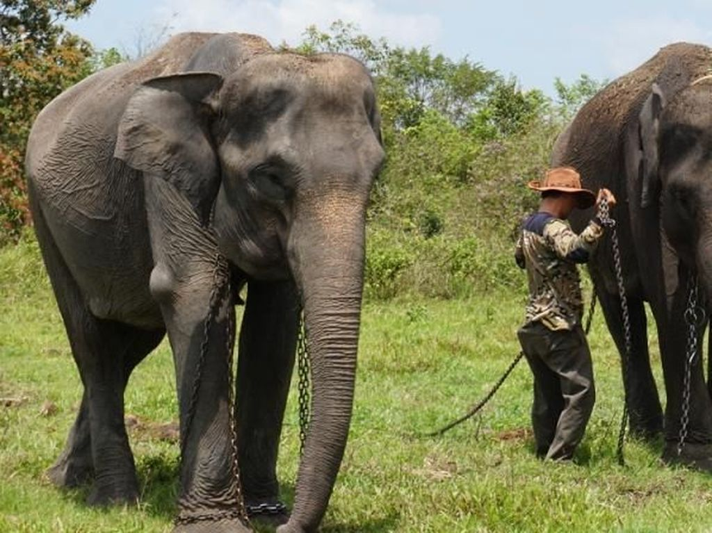 Yuk, Lihat Gajah di Taman Nasional Tertua di Indonesia!