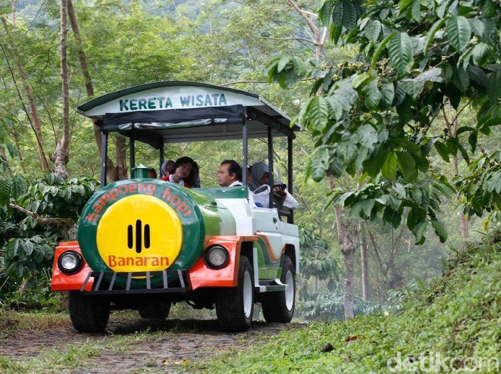 Asyiknya Keliling Kebun Kopi dan Ngopi Nikmat di Kampoeng Kopi Banaran