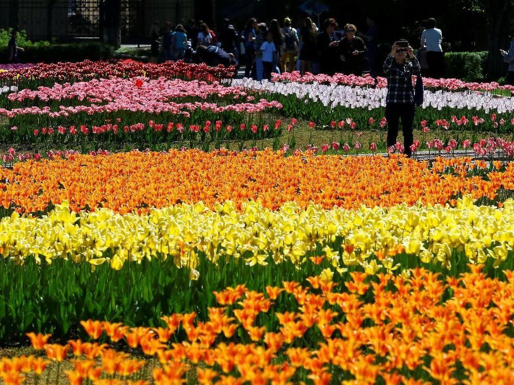 Melihat Indahnya Festival Bunga Tulip di Kazakhstan