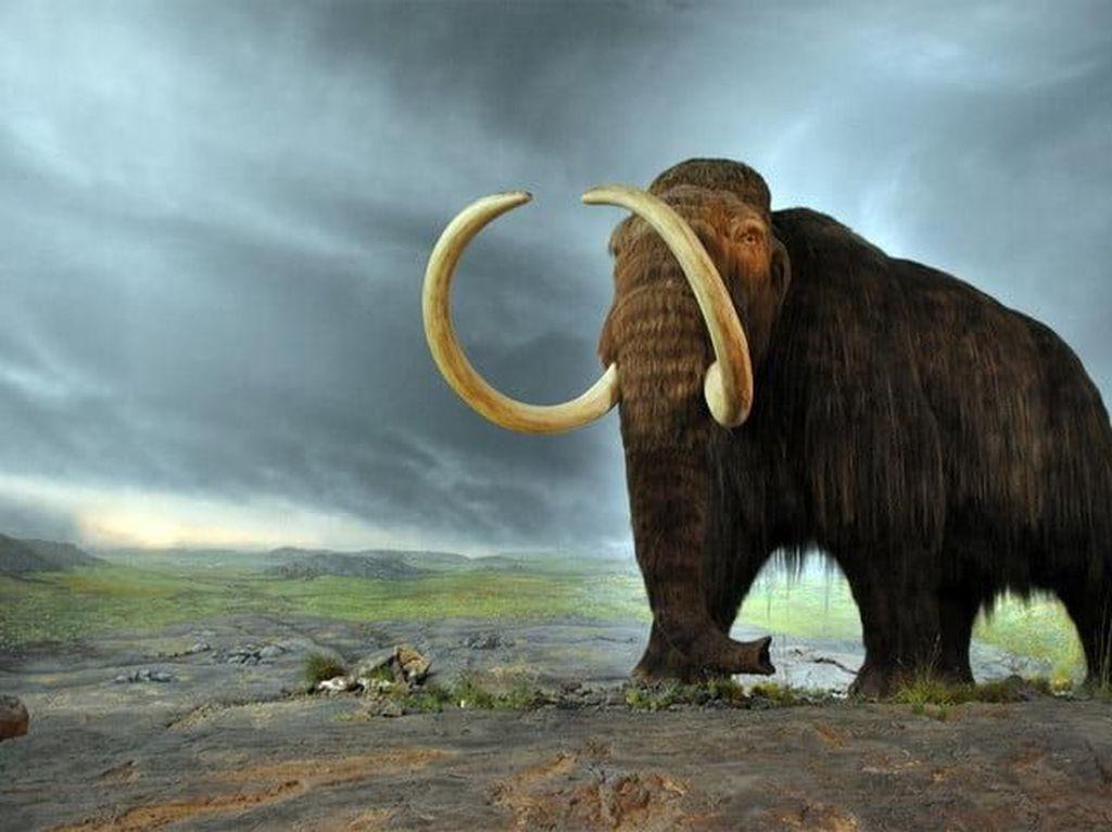 DNA Mammoth Berumur Jutaan Tahun Ditemukan di Siberia