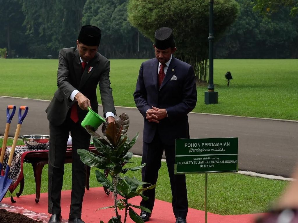 Potret Jokowi dan Sultan Brunei Tanam Pohon Perdamaian