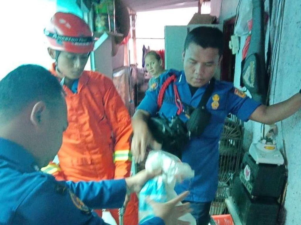 Petugas Damkar Tangkap Kobra yang Masuk Rumah Warga di Ciracas