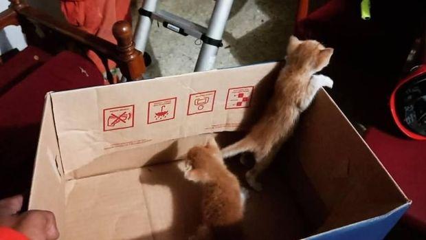 Anak kucing yang diselamatkan petugas damkar