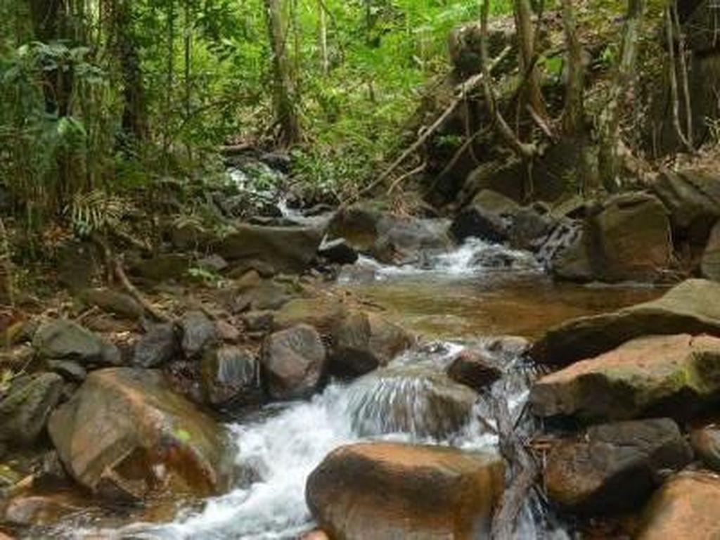Surga Tersembunyi di Tengah Belantara Hutan Banjar